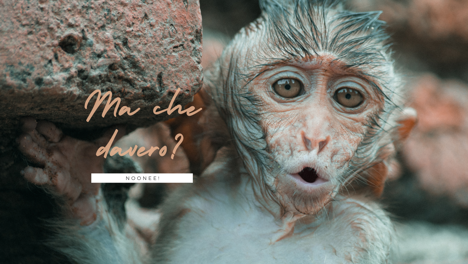 """Foto di una scimmia con espressione sorpresa, con scritta """"Ma che davero?"""""""