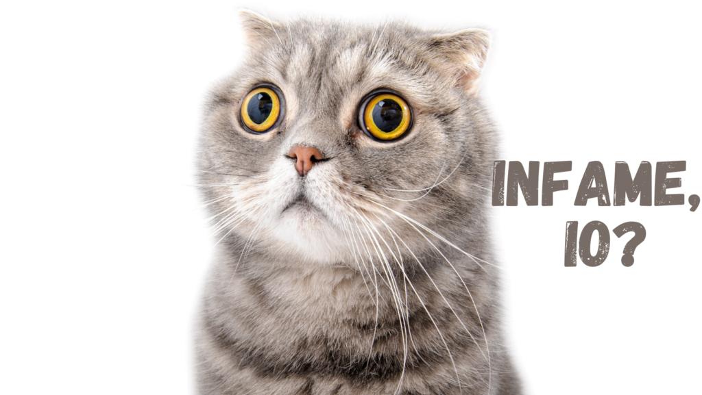 """Foto di gatto con occhi spalancati ed orecchie all'indietro, con scritta: """"Infame, io?"""""""