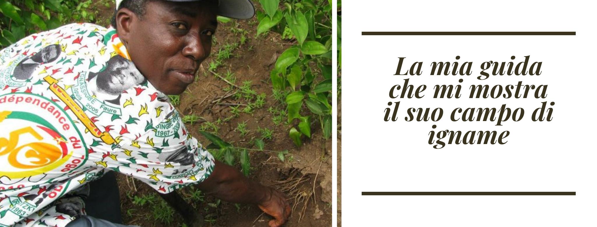 foto: la guida di Vera Ghirardini  in Togo che mostra un campo di igname