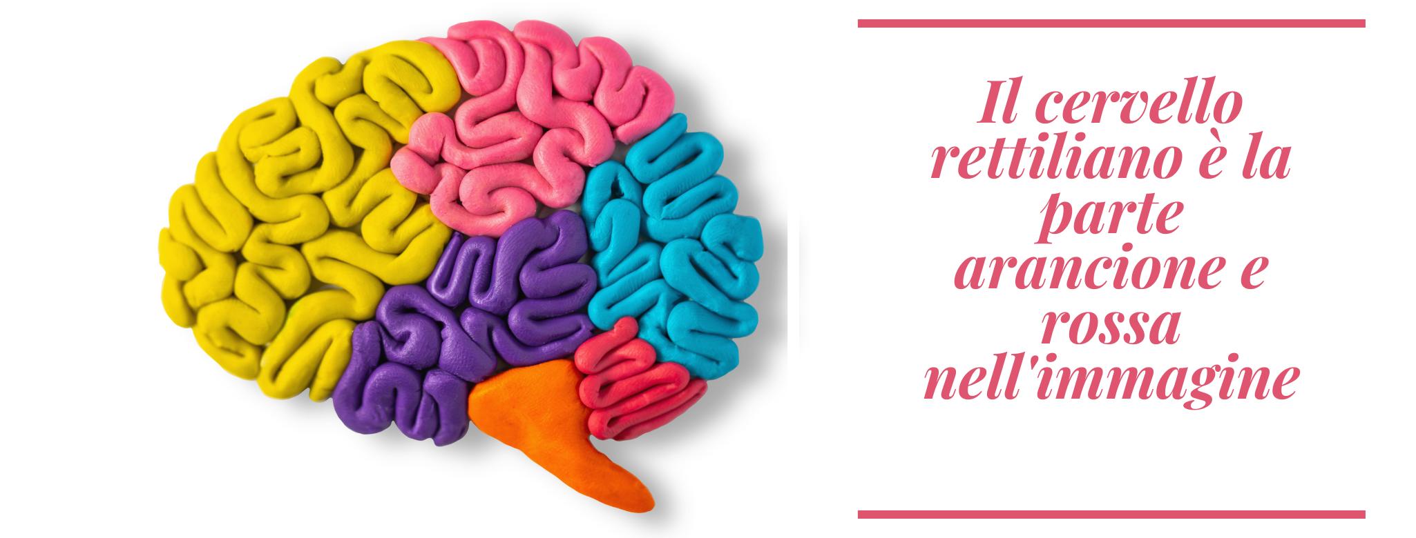 immagine del cervello suddiviso in aree che mostra quale è la parte del cervello rettiliano