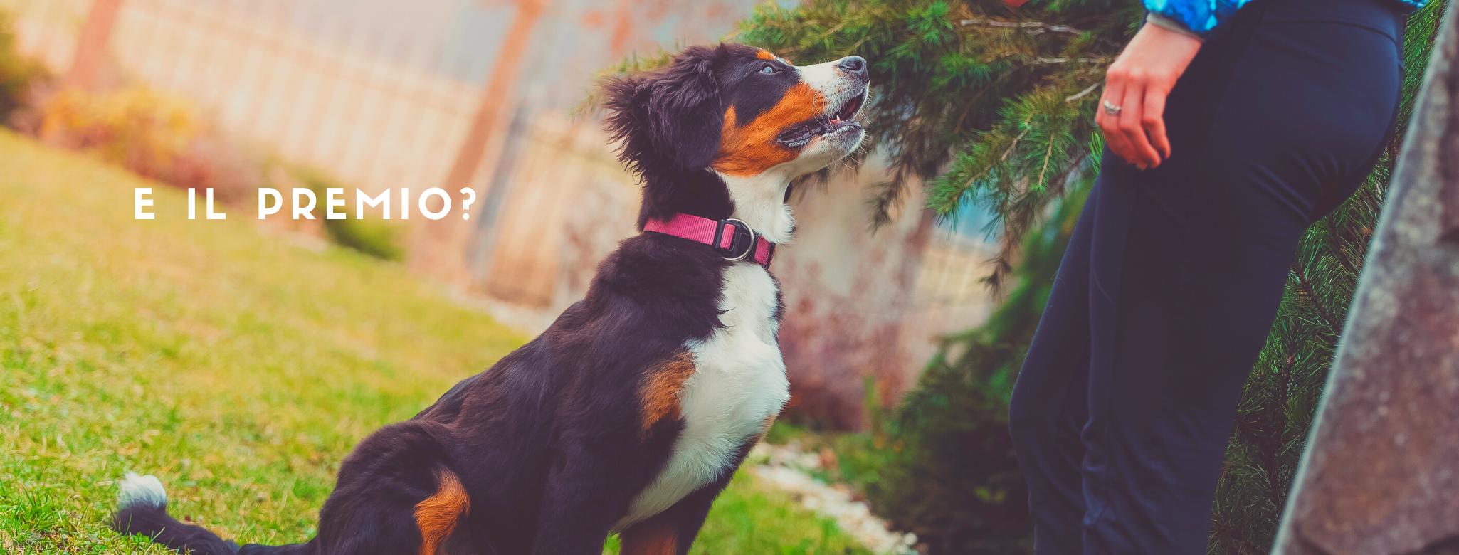 foto di un cane in attesa del premio dal padrone